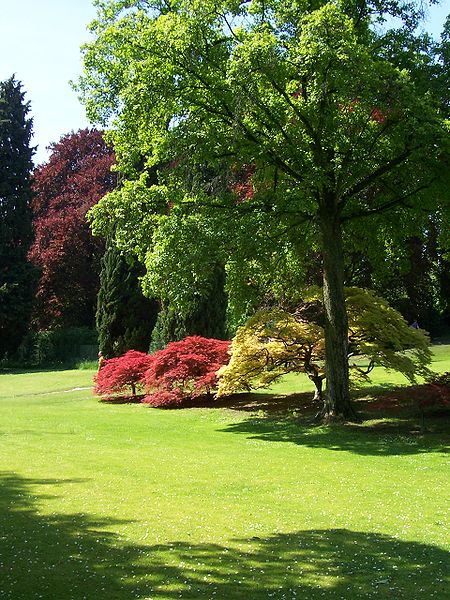 Parco giardino sigurt for Piante e alberi da giardino